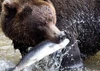 Wartości odżywcze łososia, witaminy i kwasy omega