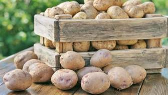 czy ziemniaki tucza dieta